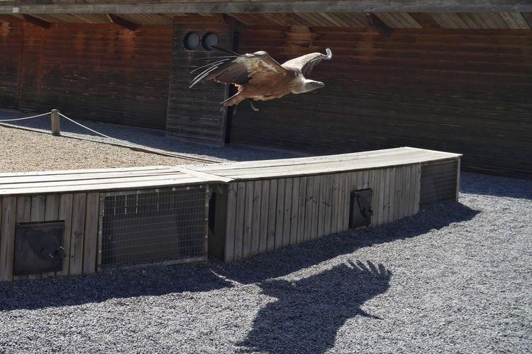 Architecture Built Structure City City Life Courzieu Day Lifestyles Oiseaux Outdoors Parc Animalier De Courzieu Sunlight Vulture Vulture Flying