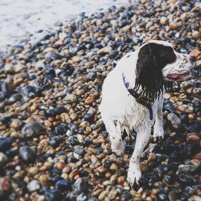 Dog at Brighton Beach Vscocam Dog IPSContest Love tweegram instagood brighton photooftheday iphonesia instamood igers instagramhub picoftheday instadaily bestoftheday igdaily instagramers webstagram follow statigram life