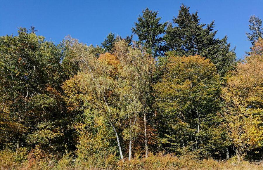 Waldrand Tree Full Frame Sky Plant