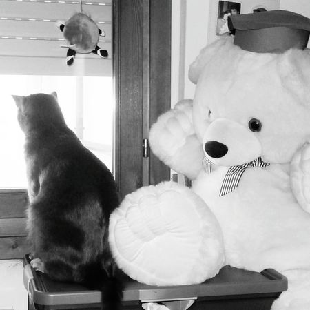 Day Casa Gatto😸 Tvb❤ Biutifull Photo Love To Take Photos ❤ Bellezza Domestic Cat Bellissimmo