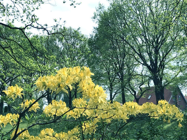 Nature in the city park under spring Beauty In Nature Blossom Botanical Gardens Botany City Colorful Colorfull Colors Day Flower Fragility Freshness Growth Growth Nature Nature Outdoors Pattern People Plant Springtime Summer Tree Yellow Yellow Flower