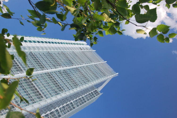 Intesa sanpaolo Architecture Beauty In Nature Blue Branch Building Exterior Built Structure Clear Sky Close-up Day Freshness Grattacielo Growth Intesa Leaf Low Angle View Nature No People Outdoors Plant Sanpaolo Sky Tree