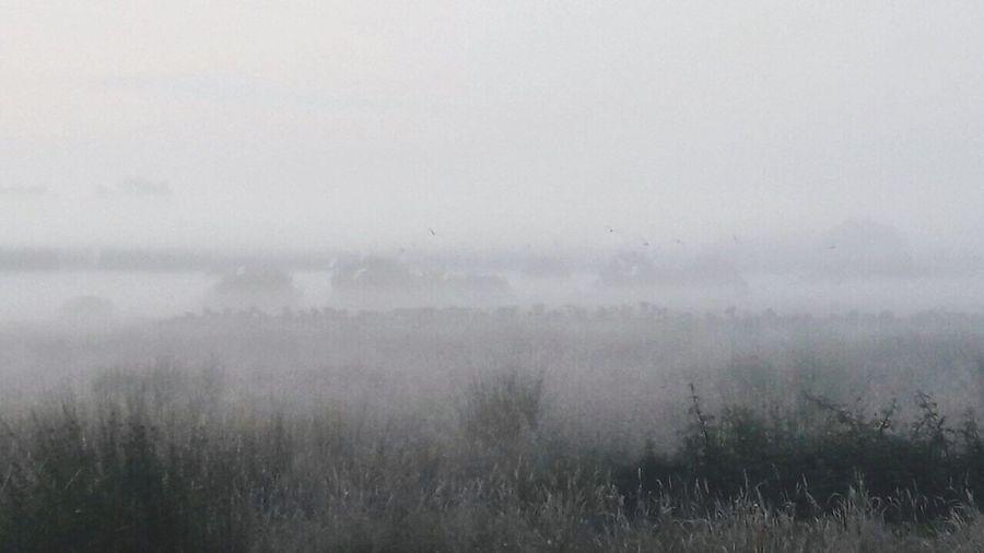 Fog Mist Nature
