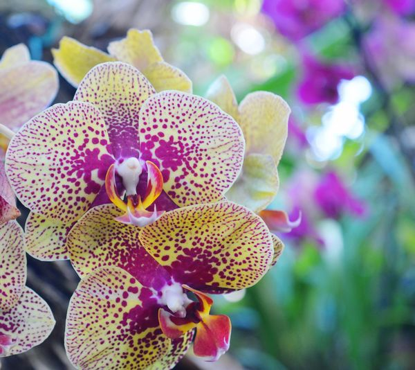 Close-up of orchids on plant