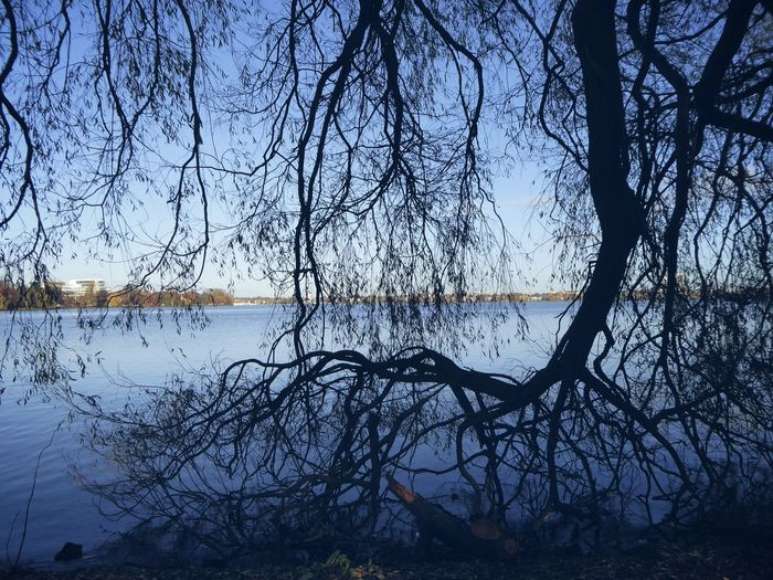 The beauty of bare trees😍 Love That Place 💙HH For My Friends 😍😘🎁 Hamburg Impression Bluesky♡ Enjoying Life Perfect Day😍 Tranquil Scene YESVEMBERFUN You Raise Me Up✨ Simple Beauty Hamburg An Der Alster Beauty In Nature Treelovers Alster View Mood Captures Beauty In November What A Beautiful Day Go Higher
