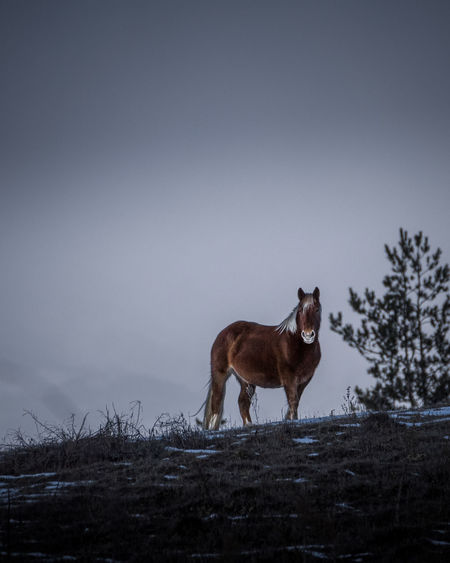 Side view of a horse on snow covered field