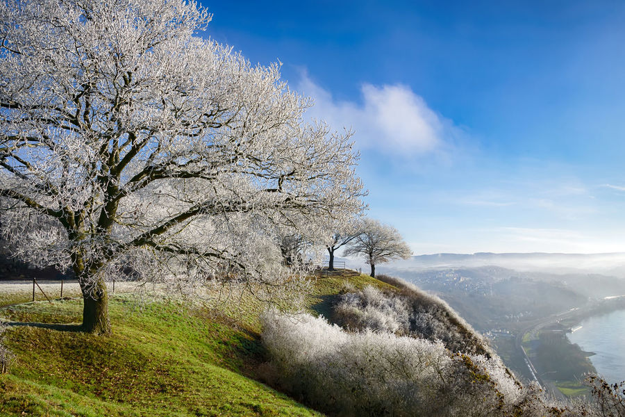 Broadleaf tree powdered with hoar frost on a cold winter morning, from viewpoint Erpeler Ley, Middle Rhine Valley, Germany. Erpeler Ley Ice Middle Rhine Rhine Romantic Landscape View Winter Beauty In Nature Cold Frosty Hoar Frost Hoarfrost On The Tree Landscape Mountain Nature Outdoors Rhineland-palatinate Scenics Sky Tranquil Scene Tranquility Tree Valley Viewpoint Westerwald Shades Of Winter