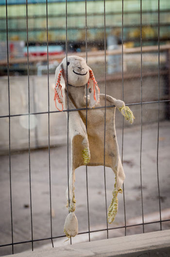 Noooo... Forgotten, but trying to keep smiling! Abandoned Bitter-Sweet Bunny  Cage Close-up Construction Site Fence Forgotten Happy Lonely No People Positive Thinking Positivity Rabbit Sad Smile Smiling Soft Stuck Toy Toys Trapped Plush Toy Stuffed Toy Plush