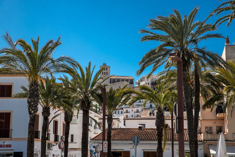 EyeEmNewHere Architecture Blue Building Building Exterior Built Structure City Clear Sky Coconut Palm Tree Dalt Vila Date Palm Tree Day Growth Nature Outdoors Palm Tree Plant Sky Tree Tropical Climate Tropical Tree My Best Photo