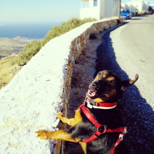 Dog Pets Sunlight Tinos Greece