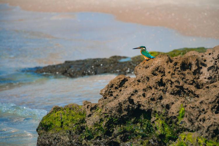 Bird on rock in sea