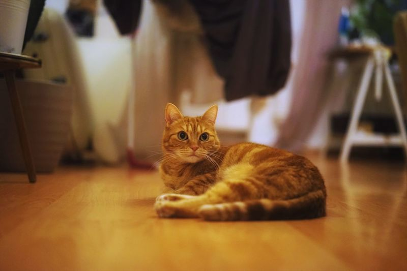 Catty Pets