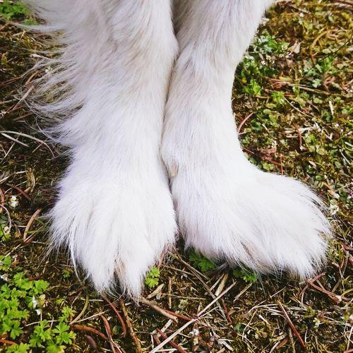 Ballet Dancer Ballerina Zweiteposition Grass Human Leg Outdoors Close-up Animal Leg Pets One Animal Pfoten Low Section White Color Day Domestic Animals Animal Themes Nature Mammal People