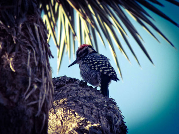 Bird Animals In The Wild One Animal Animal Wildlife Animal Themes Black Color No People Outdoors Nature Day Bird Of Prey Perching Woodpecker Sustainable Resources Nature Desrt Scenes The Great Outdoors - 2017 EyeEm Awards