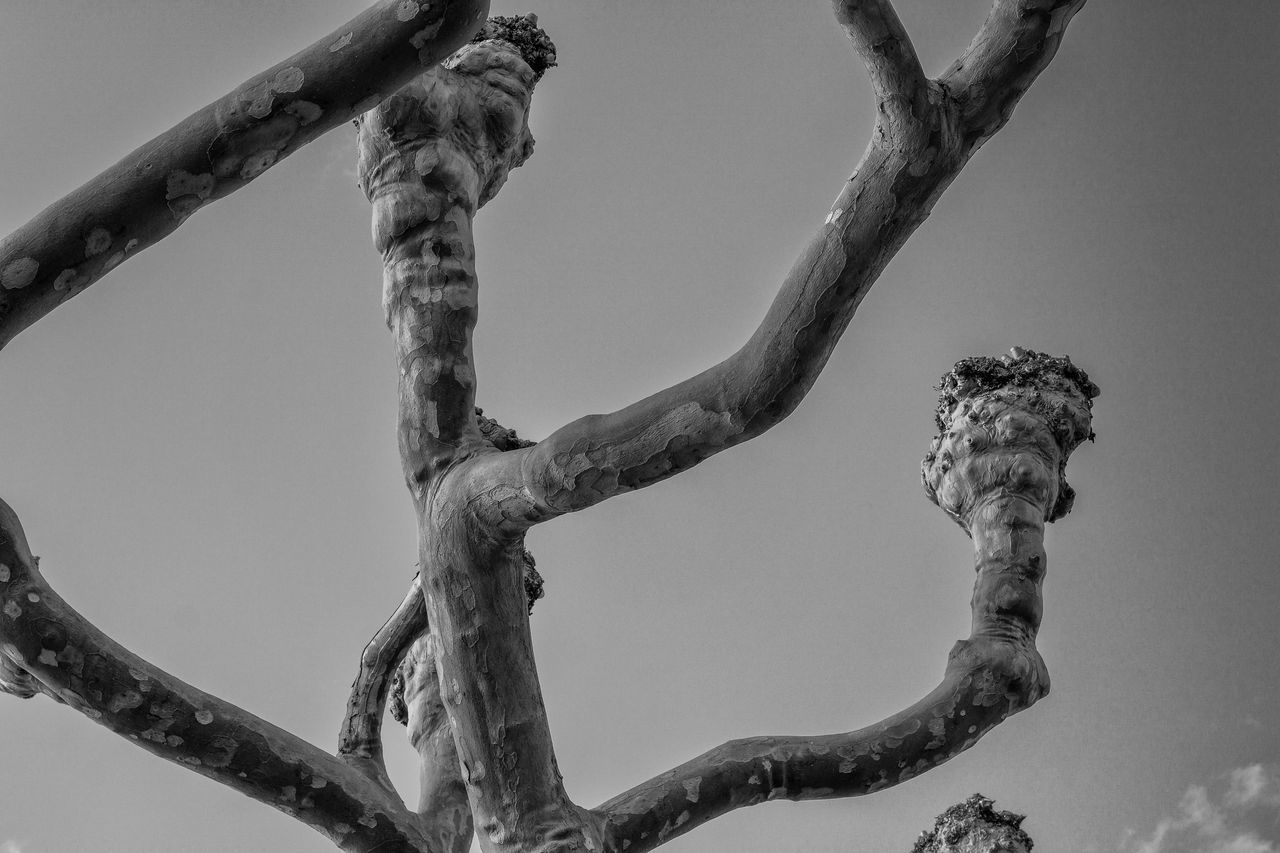 low angle view, branch, no people, day, tree, outdoors, animal themes, sculpture, nature, mammal, clear sky, sky, close-up