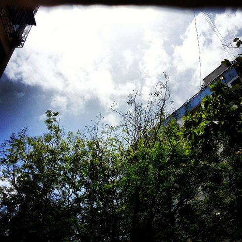 I think my photography skill's have increased..??!!! What u say ppl..!! Ozone Aprt People tree Branch Building Fully Fun SKYY Instamumbai India_gram