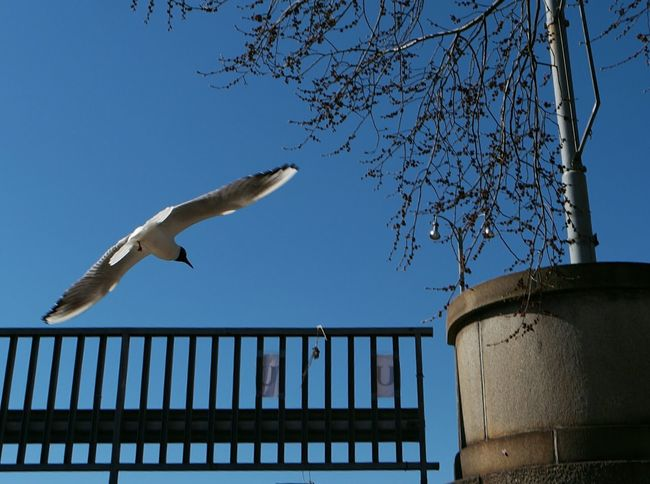 Seagulls Flying Over Me Seagull And Sky Seagulls In Flight Mayday 2016 Sunshine ☀ Seagulls In The City Sunny Day Mayday  Sunshine Urban Spring Fever Up Close Street Photography Turku In Finland Finland