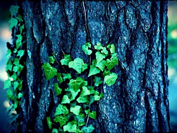 Green Green Green!  Warking♡ Relaxing Tree_collection  Enjoying Life Taking Photos Hello World Morning Walk Japan Photography