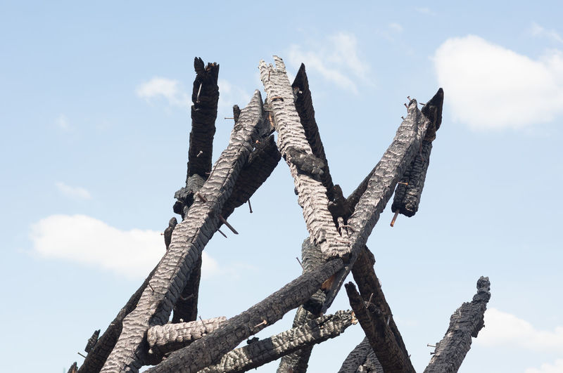 Low angle view of burnt wood against sky