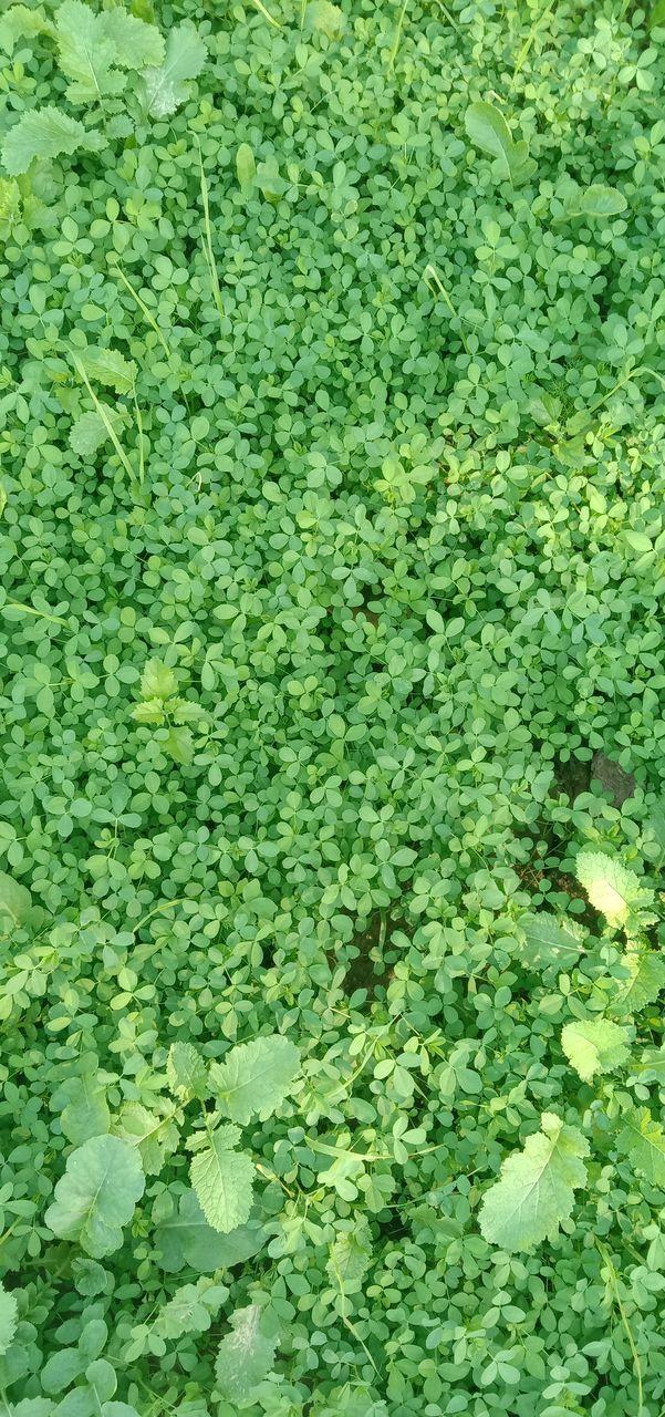 FULL FRAME SHOT OF PLANTS GROWING ON PLANT