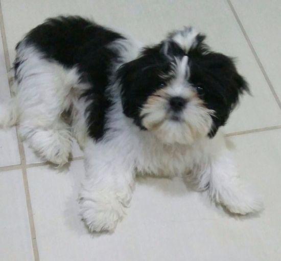 Dog on tiled floor