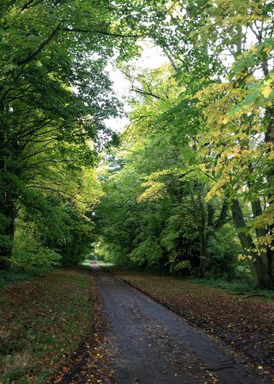 View down an English lane. Lane Road The Way Forward Green Color Tree Nature Growth Scenics Road Outdoors Tranquility Path Forward Beauty In Nature Single Lane Road Forest Landscape Lush - Description No People Day Tarmac Asphalt Paved Road Betterlandscapes