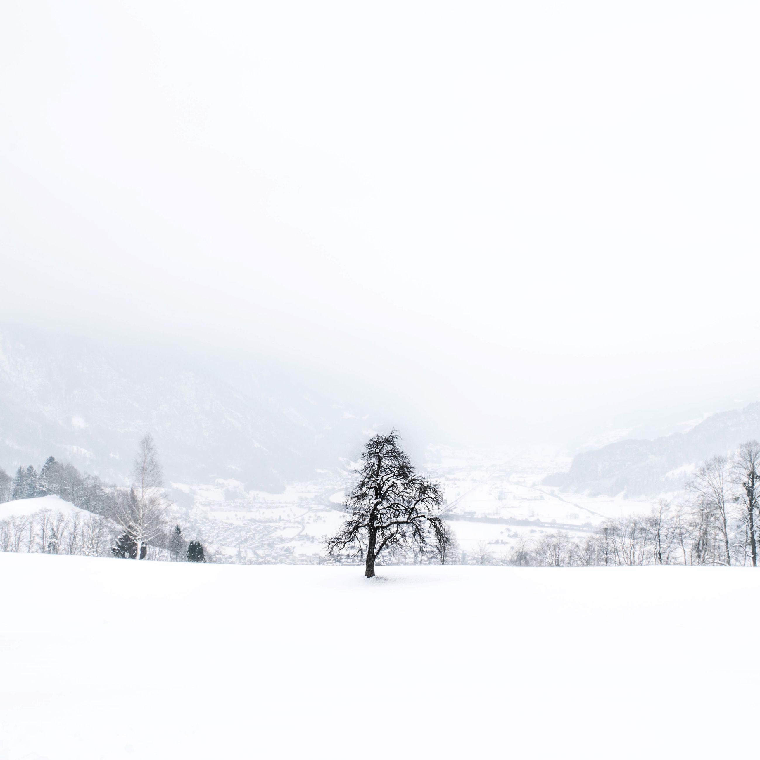 snow, winter, cold temperature, season, tranquil scene, weather, tranquility, scenics, landscape, beauty in nature, tree, mountain, nature, clear sky, covering, copy space, white color, non-urban scene, frozen, bare tree