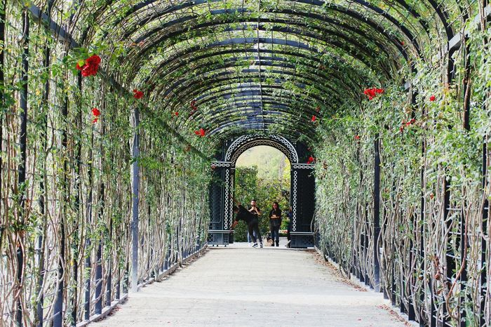 Vienna Schloß Schönbrunn Roses Garden Eye4photography  Austria Garden Architecture Nature