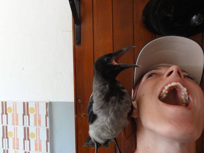 Singing Animal Bird Comfortable Crow Fun Happy Indoors  Making The Same Face NAT Open Mouth Wild Animal Young Adult