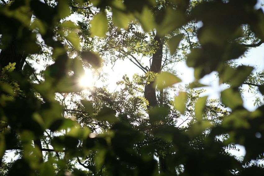 Green Leaves Greeneyes Leafs Moment Naturesoul Greenlife 바른생태살림원 | be the Nature
