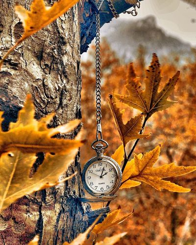 Autumn Branch Change Clock Clock Face Close-up Day Hanging Hour Hand Leaf Minute Hand Nature No People Old-fashioned Outdoors Pocket Watch Roman Numeral Time Tree