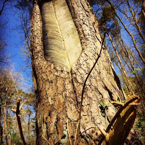 old tree Tree Plant Low Angle View No People Day Sky Nature Growth Outdoors Branch Sunlight Pattern Full Frame Beauty In Nature Trunk Backgrounds Tree Trunk Tranquility Close-up Plant Part