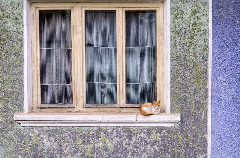 Cat on window of a house