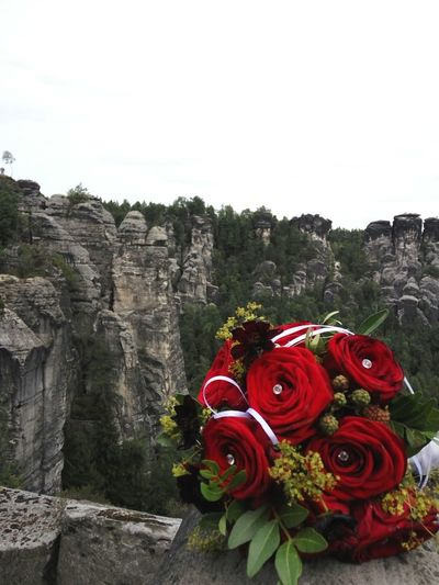 Close-up of red roses against sky