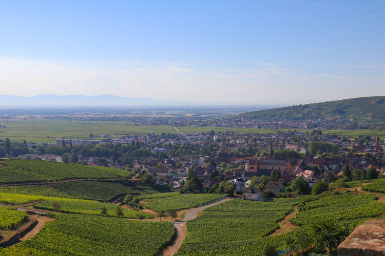 View from vineyards to Turckheim Alsace Agriculture Architecture Beauty In Nature Building Building Exterior Day Environment Farm Field Idyllic Land Landscape Nature No People Outdoors Plant Plantation Rural Scene Scenics - Nature Sky Tranquil Scene Tranquility Vineyard