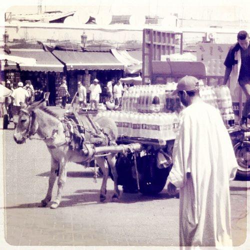 Marrakech Love