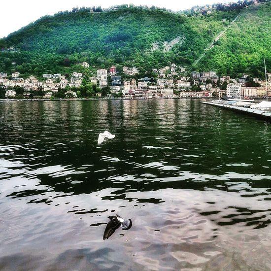 never walk alone.. Nature Como Italy Lake Birds Travel