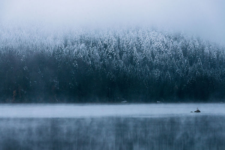Lake Eibsee during a calm winter morning Animal Themes Animal Wildlife Animals In The Wild Beauty In Nature Bird Cold Temperature Day Fog Frozen Lake Landscape Nature No People One Animal Outdoors Scenics Snow Tranquil Scene Tranquility Tree Water Winter