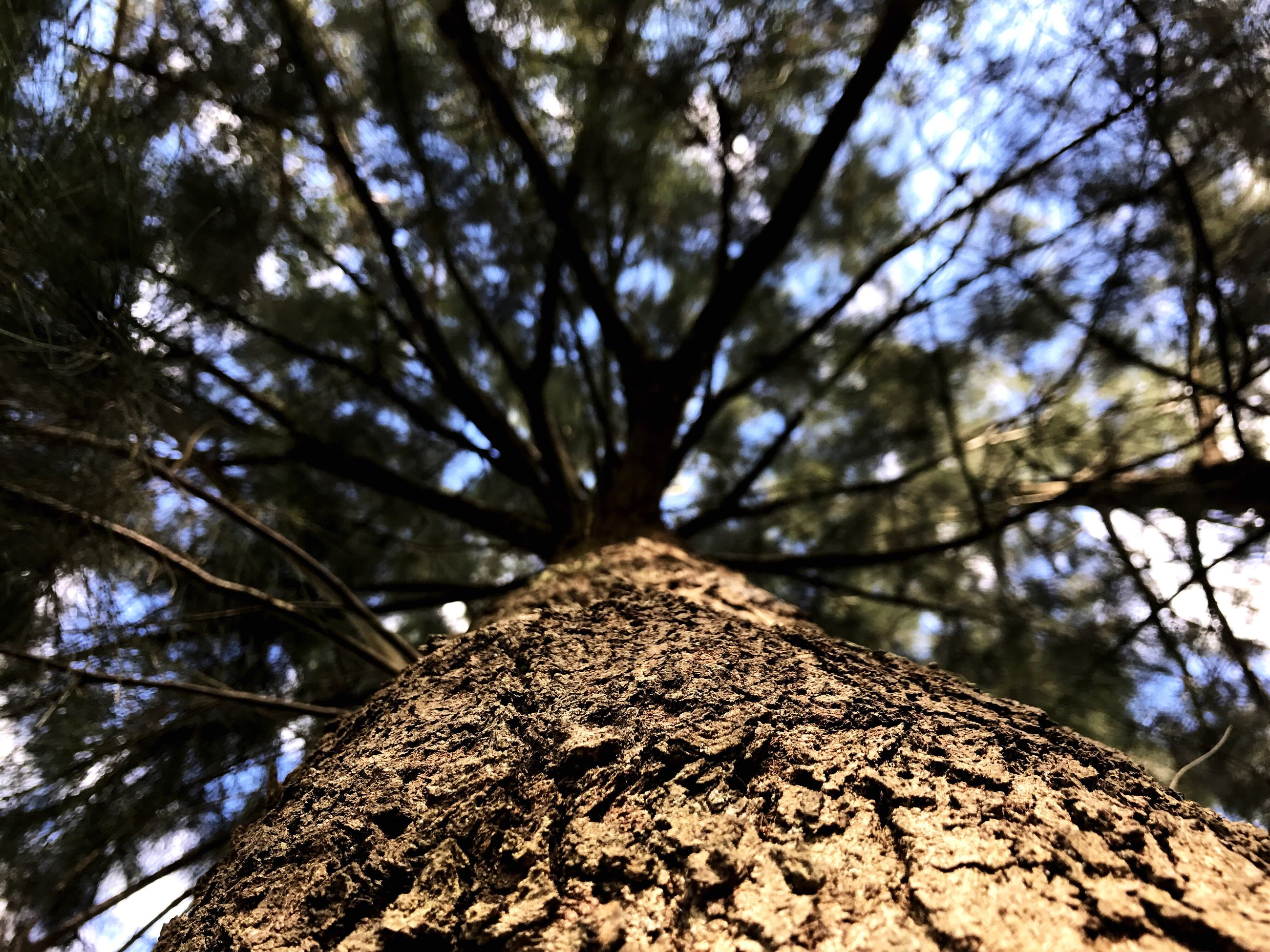 tree, low angle view, tree trunk, growth, day, outdoors, branch, nature, textured, no people, bark, beauty in nature, sky, close-up
