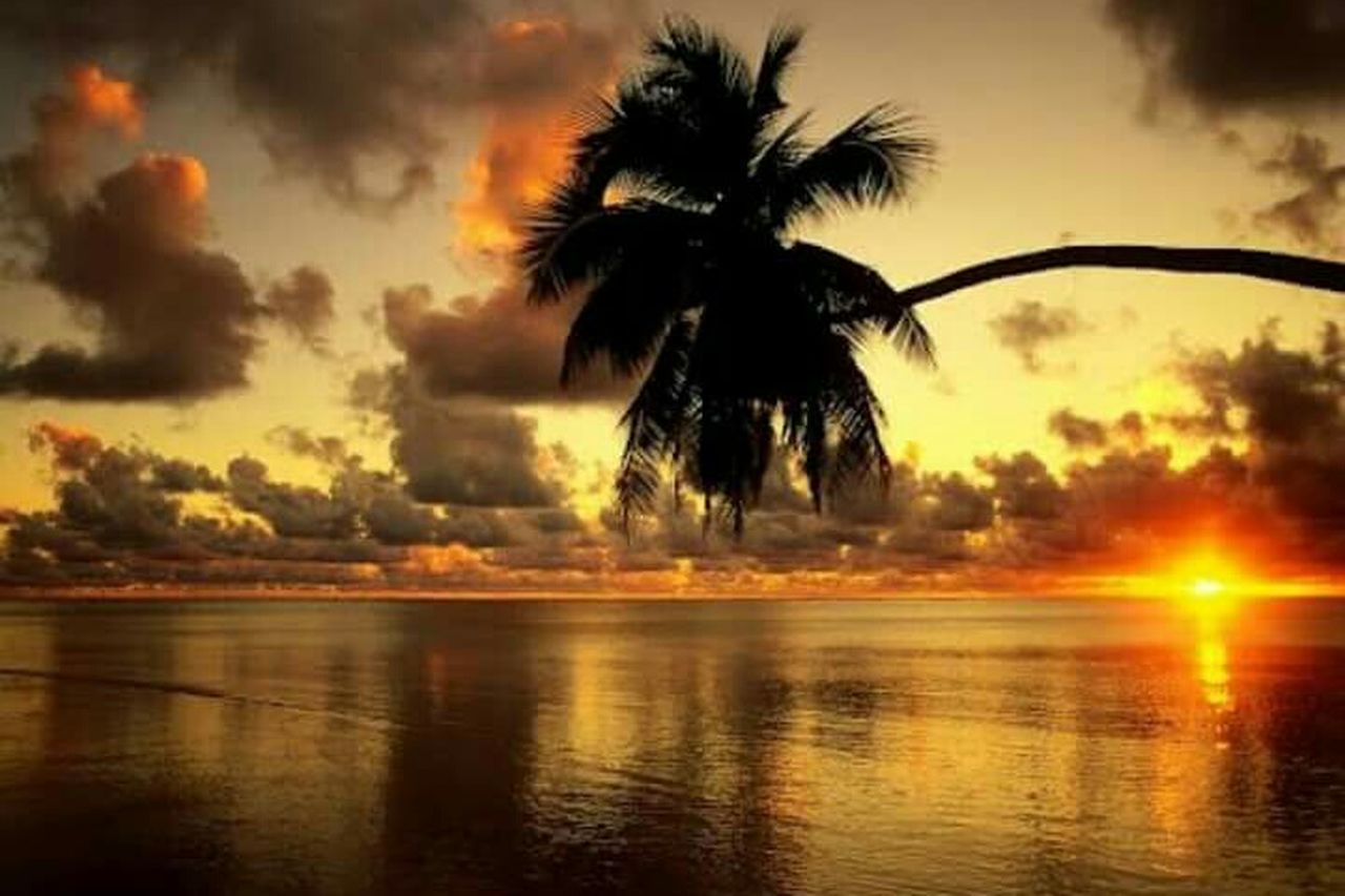 palm tree, reflection, tree, sunset, silhouette, cloud - sky, no people, outdoors, sky, water, day, nature, beauty in nature