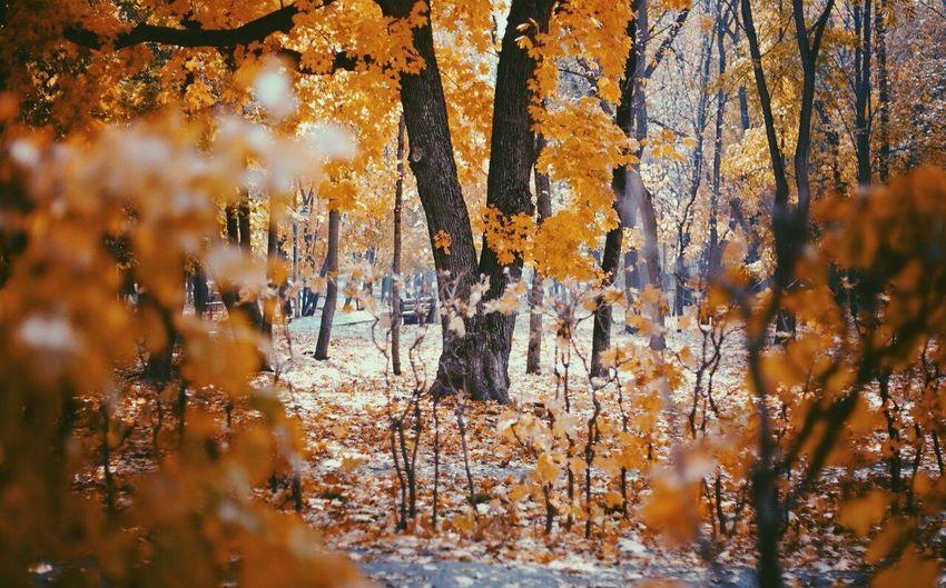 Autumn Autumn Colors Autumn Collection Nature Nature Photography Maple Tree Maple Garden