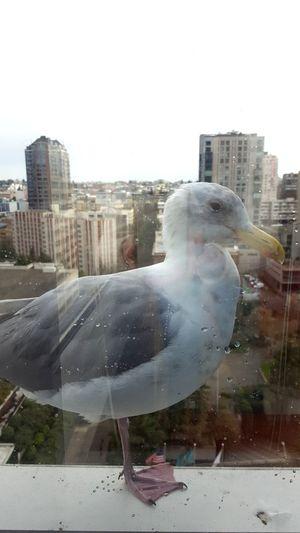 Bird flying over buildings in city