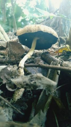 Hongos :) Hongos  Biology Ciencia Beautiful EyeEm Nature Lover Eyemphotography