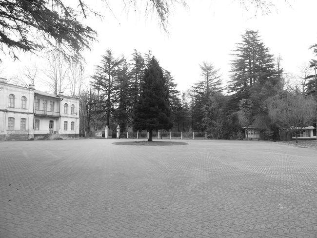 Architecture Black And White Building Exterior Built Structure Day Georgia No People Old Castle Outdoors Sky Spruce Tree Tree Zugdidi Zugdidi Botanical Garden