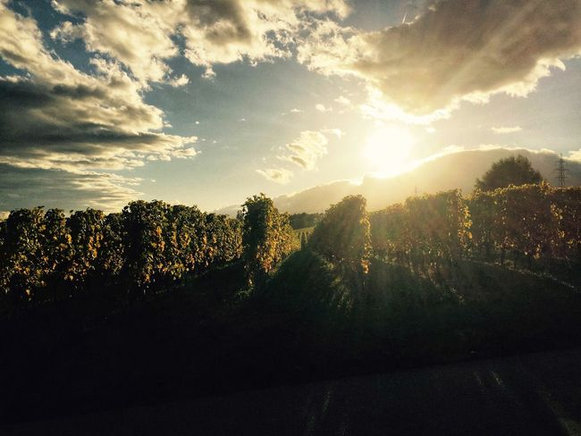 Vinyards Switzerland Sunset Perfect Moment Cloud Clouds And Sky Sun