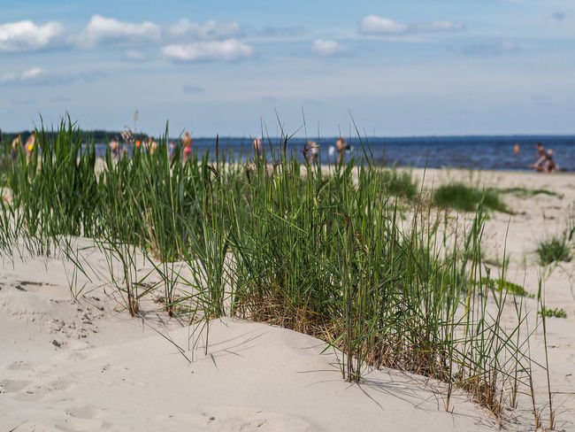 Baltics Balticsea Jurmala JurmalaBeach Latvia Skyline Beach Beauty In Nature Day Grass Green Color Growth Horizon Over Water Nature Outdoors Plant Sand Scenics Sea Sky Summer Tranquility Water