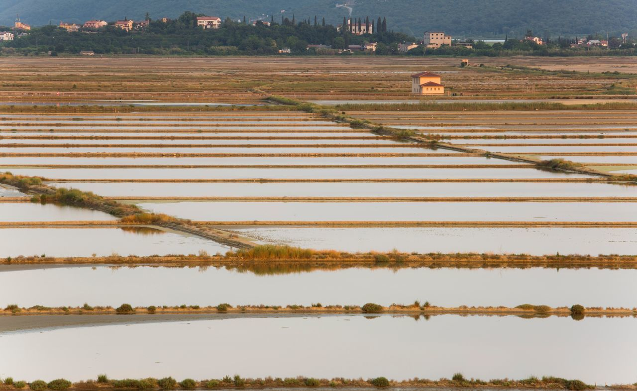 agriculture, field, farm, rural scene, nature, outdoors, landscape, tranquility, day, no people, scenics, beauty in nature, growth, rice paddy, salt basin