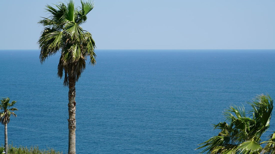Beach Beauty In Nature Blue Clear Sky Day Foreground Green Color Growth Horizon Over Water Nature No People Outdoors Palm Tree Scenics Sea Sky Tranquil Scene Tranquility Tree Water Resting Time Rest Japan Photography Japan Photos Japan Culture