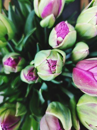 Tulips... EyeEm NatureLovers Flower Power🌼 Flower Head Flower Artichoke Leaf Social Issues Close-up Plant Green Color Food And Drink In Bloom