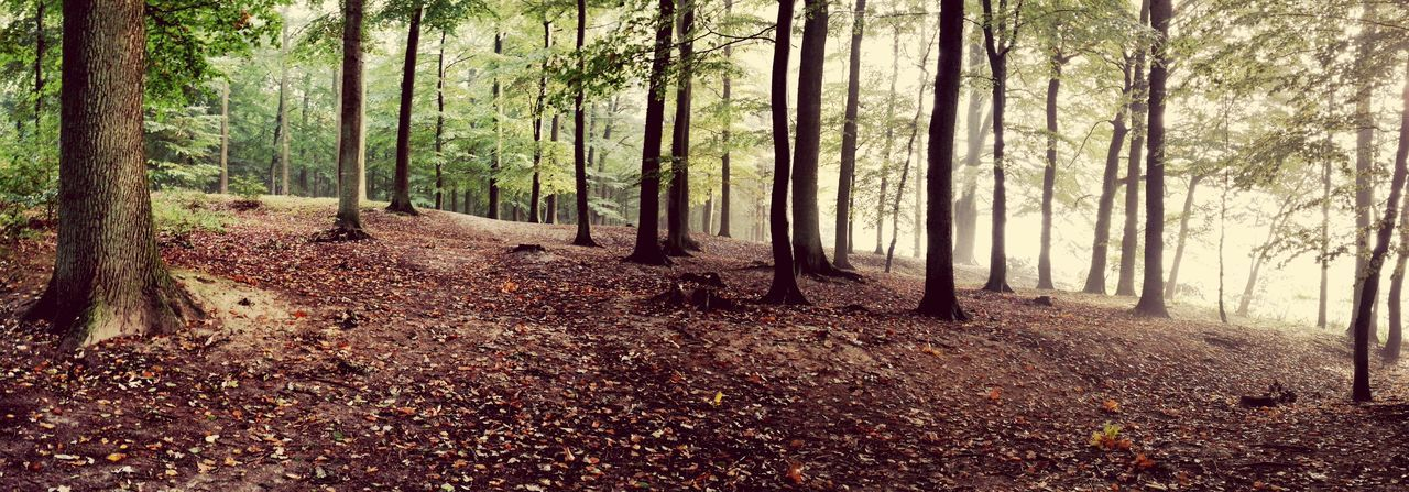 Tree Forest Nature Leaf Autumn Beauty In Nature Scenics WoodLand Tranquility Outdoors Change Tree Trunk The Way Forward Day Tranquil Scene No People Growth Landscape Tree Area Osnabrücker Land Osnabrücker Land Germany Osnabrück Nettetal Osnabrück/Germany Osnabrück Perspectives On Nature